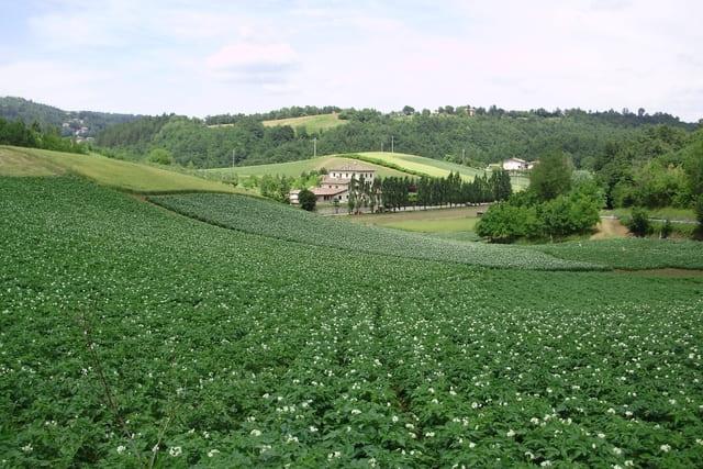 Agriturismo-a-modena-Il-Palazzino