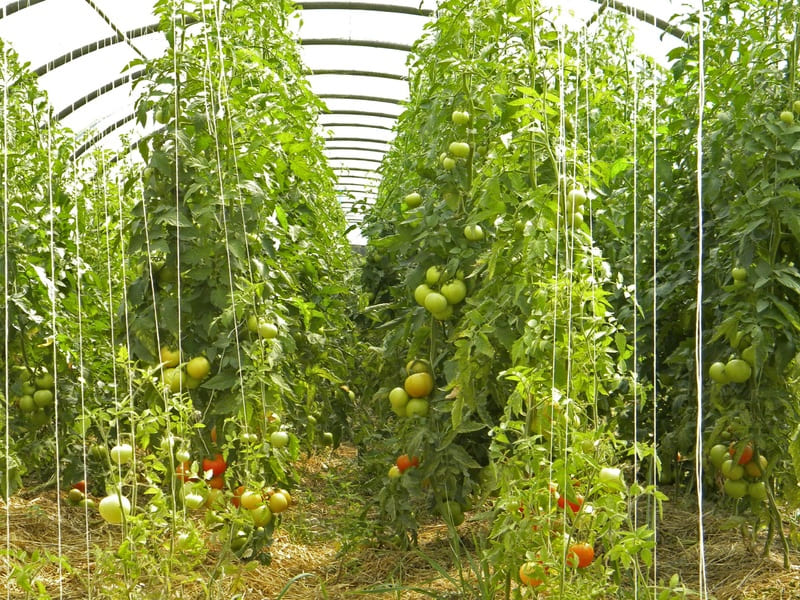 Come-funziona-lagricoltura-biologica