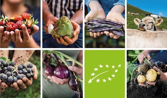 Il logo biologico dell'UE