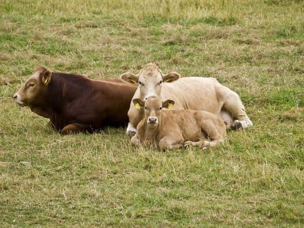 differenza-tra-latte-biologico-e-latte-non-biologico