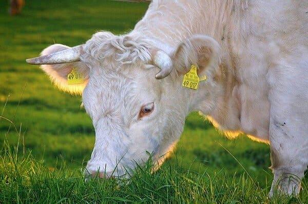 Che-cose-il-progetto-Carni-Sostenibili