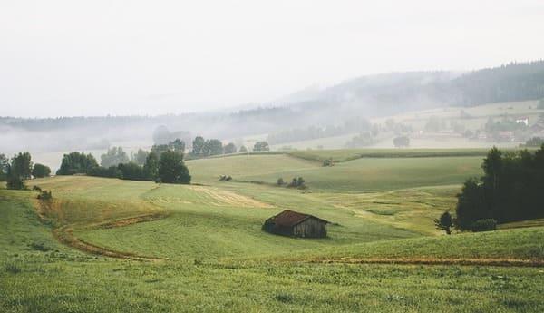 Fosfito-di-potassio-in-agricoltura-bio