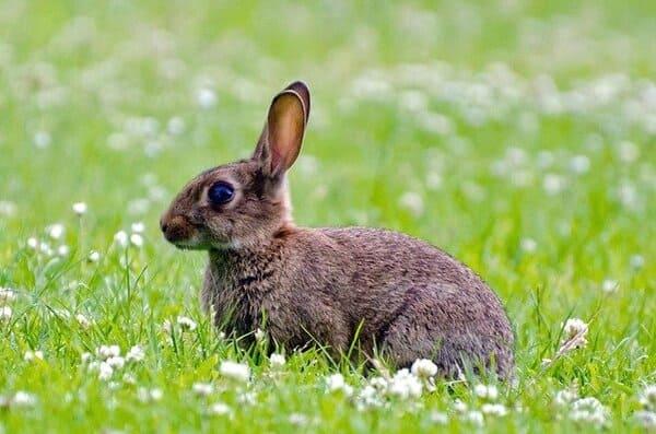 carne-piu-sostenibile-coniglio