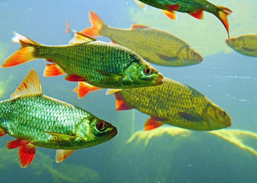Catena-alimentare-del-fiume-definizioni-principi-ed-esempi
