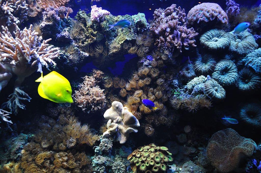 Catena-alimentare-marina