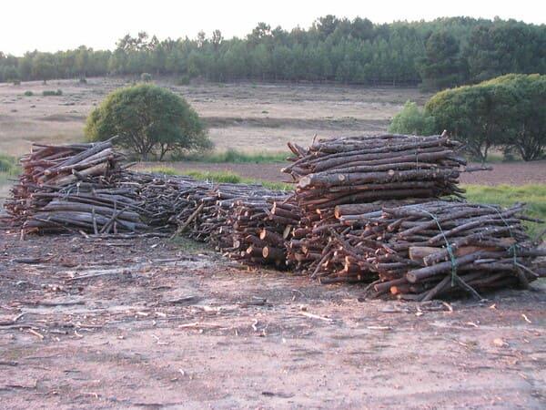 Come-vengono-usate-le-biomasse