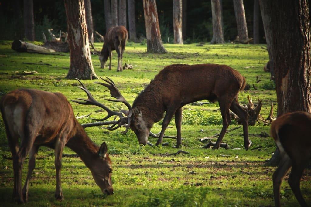 La-catena-alimentare-del-bosco