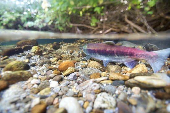 La-catena-alimentare-nel-fiume-e-nel-torrente