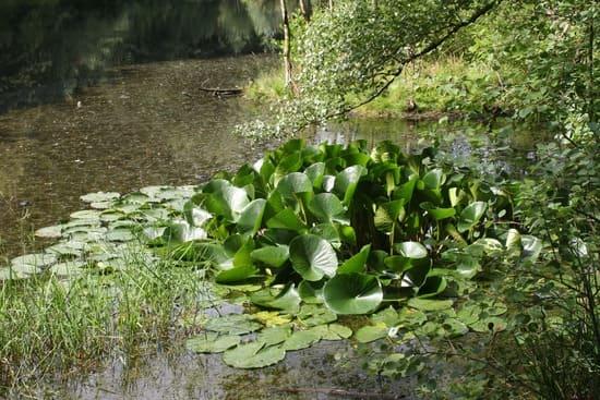 La-vegetazione-delle-rive
