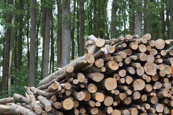 Le-biomasse-sono-una-forma-di-energia-rinnovabile