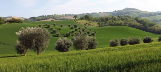 Agriturismo-Bonfigli